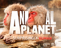Rebrand - Animal Planet - Discovery