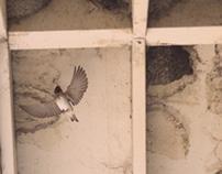 This Bird Has Flown - Biomechanics of Flight