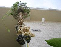 Photography - Garden