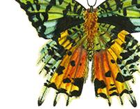 Madagascan Moth