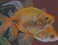 bigoldfish - pesce g rosso