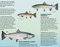 Native Freshwater Fish Brochure