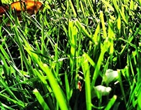 The Grass Is Always Greener On The Other Side..