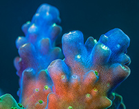 Fantastic world of fluorescent corals