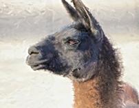 Llama - Digital Painting