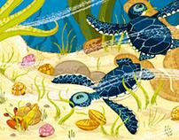 Amandine, tortue verte du pacifique