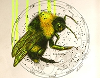 The Alchemist & The Moon Moth
