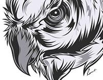 Owl  - Timelapse