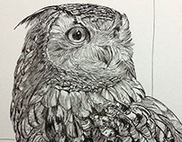 Drawing Bird_3