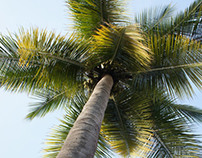 low angle shot - coconut tree
