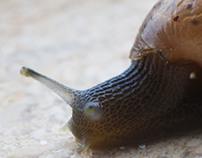 Snail Macro / Macro Caracol