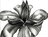 Just Another Flower Drawing