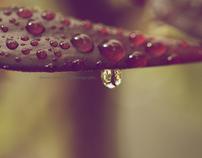 MACRO-WATER DROPS