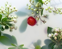 ARBUTUS FLOWERS...AND FRUITS