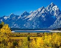 Wyoming Gold