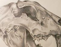 Drawings/ Illustrations