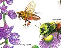 Cedar Breaks National Monument Pollinator Wayside