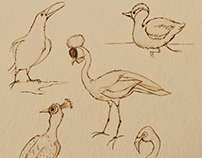 Sketches from the Zoo