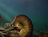 Prehistoric Nautilus