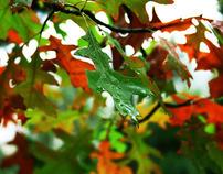 As cores da Natureza