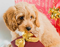 Cute Puppy for Christmas Card 2013