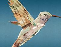 Bird   Banco Cabo Verde
