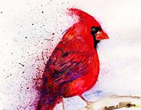 """""""Cardinal Bird"""""""