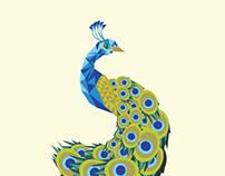 Peacock in Vector