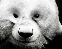 Neutrogena - Panda