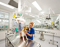UQ School of Veterinary Science