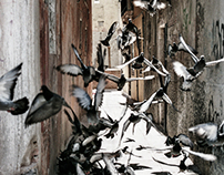 Venice 2012