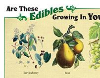 "Hidden Harvest, ""Edibles Wanted"""