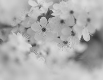Apricot April.  Black and White photography