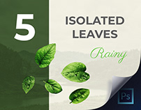 5 Isolated Leaves to Make Your Projects Interesting