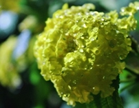 Flowers pt.2