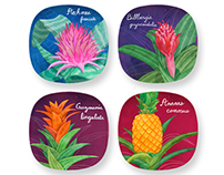 Blooming Bromeliads Plate Collection