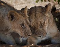 Kenya- National Parks