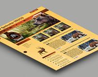 Kolo Lowiezkie URSUS web site design