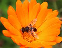 fotografía macro animales, plantas, frutos