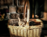 Basket Case Kitty