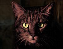 Scary Kitty