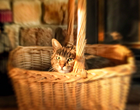 Basket Case Kitty II