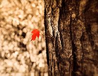 A Tiny Leaf