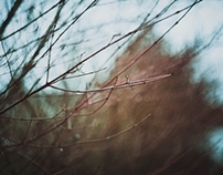 Late autumn (film photography)