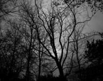 The black woodlands