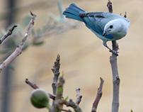 fotografía de aves