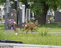Encounter with animals at the central cemetery vienna