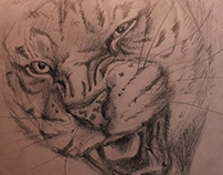 Sketch of Tigers