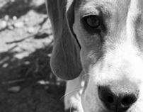 Adopción de mascotas/ Cartel para Mentes creativas 2012
