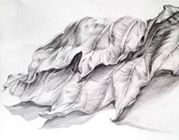 Fallen leaf sketch